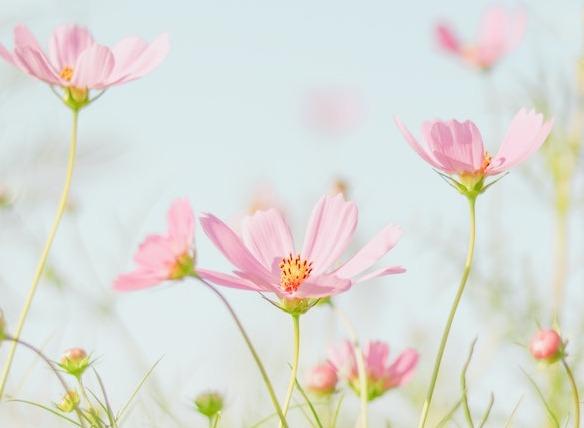 Allergies aux pollens : comment s'en prémunir ?