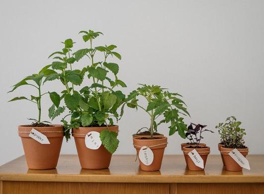 Quelles plantes utiliser pour soulager les troubles articulaires et musculaires ?