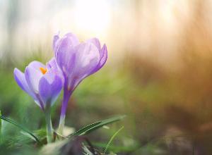 Fibromyalgie et sérénité : le chemin pour faire le deuil de son