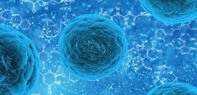 cellules-souche