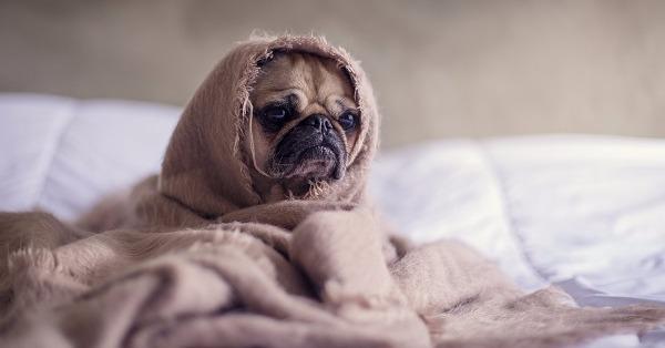 dog-bed-sad